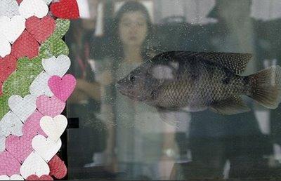 fish-skin-bikini03.jpg