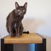 Como fazer um arranhador para gatos?