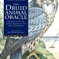 druid animal oracle