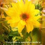 sun tarot of quotes