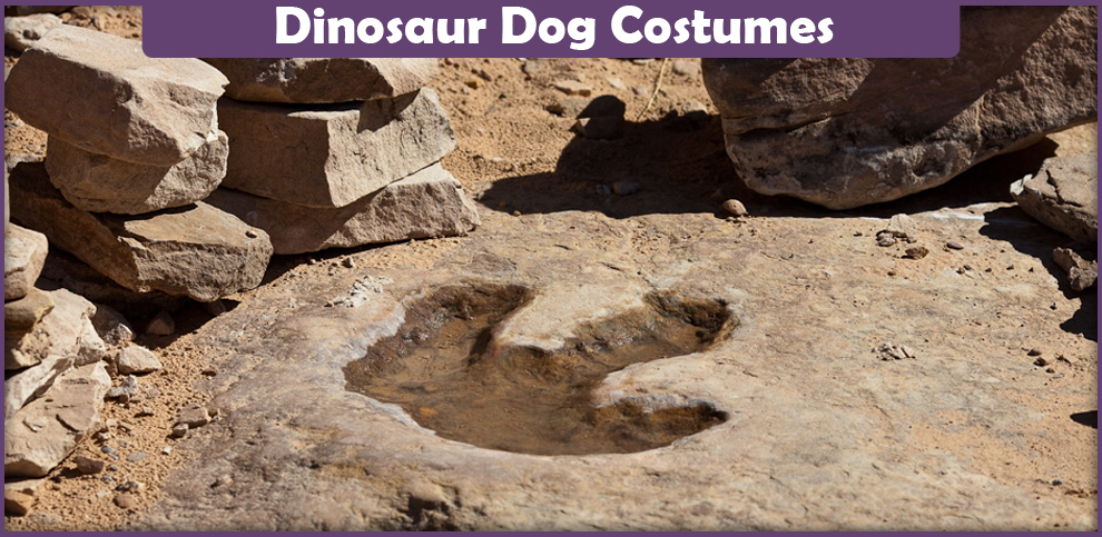 Dinosaur Dog Costumes – A DIY Guide