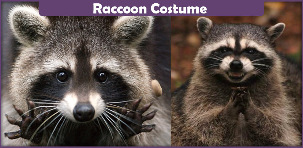 Raccoon Costume – A DIY Guide