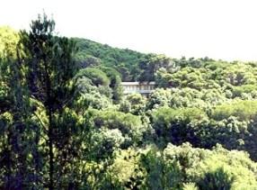 castiglioncello quercianella residence il Boschetto