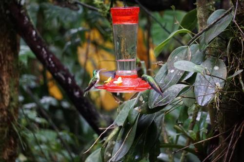 Left Hummingbird has beak open