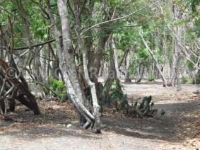 Iguanita Beach Costa Rica