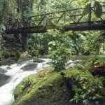 The Buena Vista Rainforest: A Natural Haven in Northwestern Costa Rica