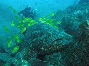 water-wildlife-costarica