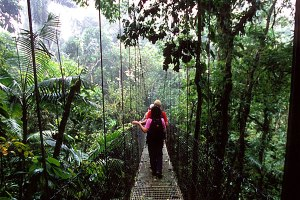 costa-rica-tree-walk