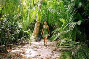 walks in the rainforest.