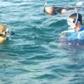 snorkleing nosara