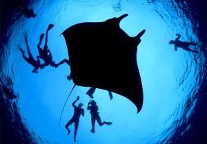 Bat Island Costa Rica