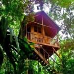 Tree-house-hotel