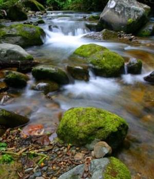 Savegre River rapids costa rica photo tour kathy adams clark