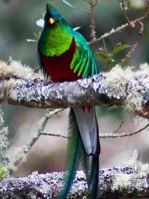Trogon-lodge-bird-watching