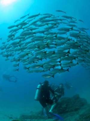 Scuba Diving Costa Rica 2