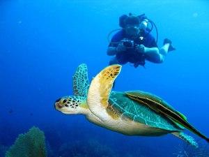 Scuba Diving Costa Rica 3