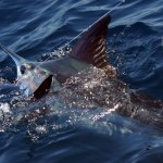 Fishing Charters Costa Rica
