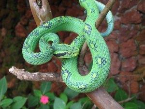 snake world of snakes