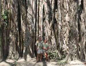 giant-banyan-tree-cabuya