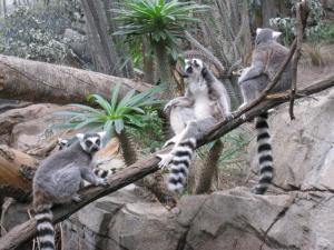 costa rica zoos