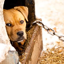 animal-cruelty abuse costa rica 1