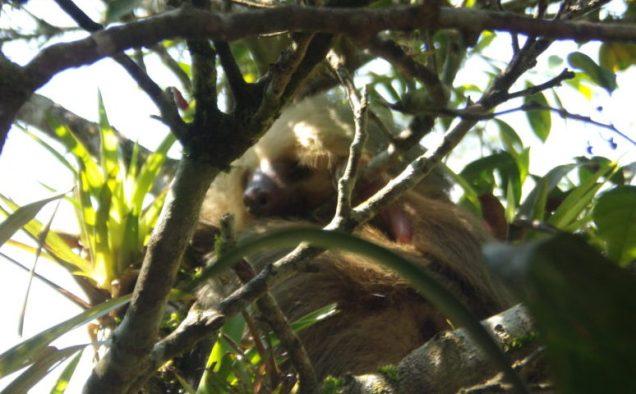 trusted realtors in san ramon costa rica