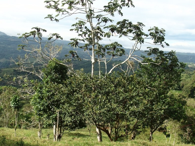 SP0275 Mountainview Lots for Sale San Ramon Costa Rica