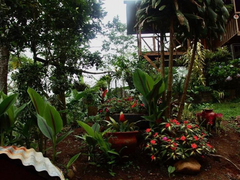 Beautiful Coffee Finca and Homestead with Organic Views