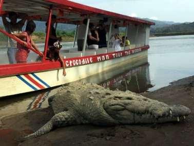 jaco beach crocodile tour