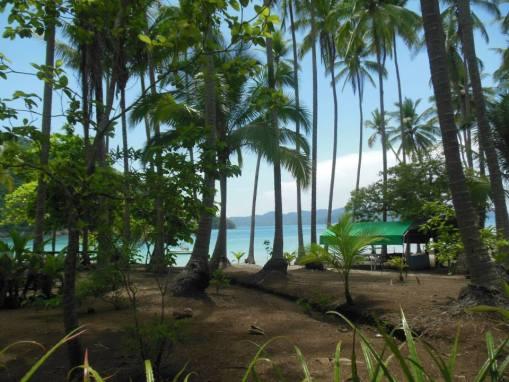 beach view tortuga