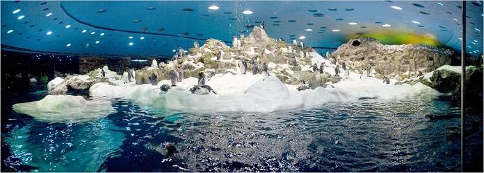 Loro Parque Pingüinos