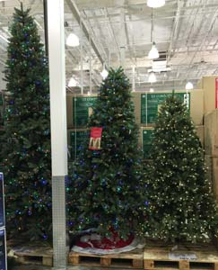 Costco Christmas Trees 2014 | Costco Insider