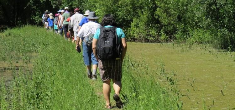 River Walk Bird Survey