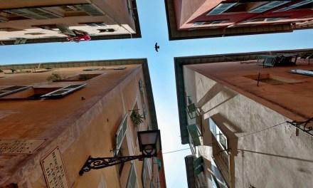 Photo de la semaine : L'oiseau et les façades du Vieux Nice