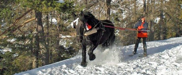 Skijoëring à la Valdeblore