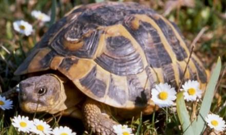 Le village des tortues de Gonfaron