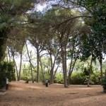 Forêt Ste Marguerite, F. Fillon©