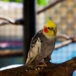 Oiseau, F. Fillon©