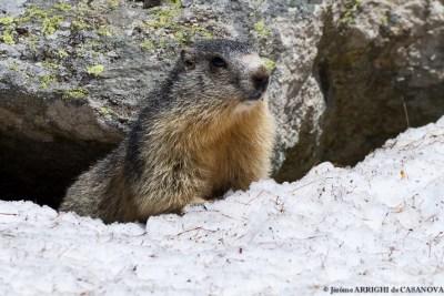 Marmotte-5044-Fenestre