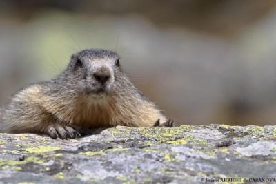 Marmotte-5155-Fenestre