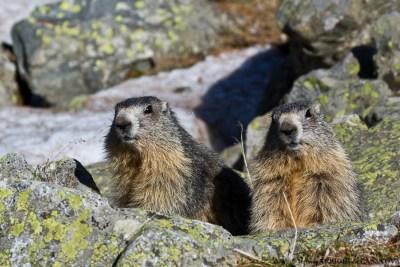 Marmottes-4879-Fenestre