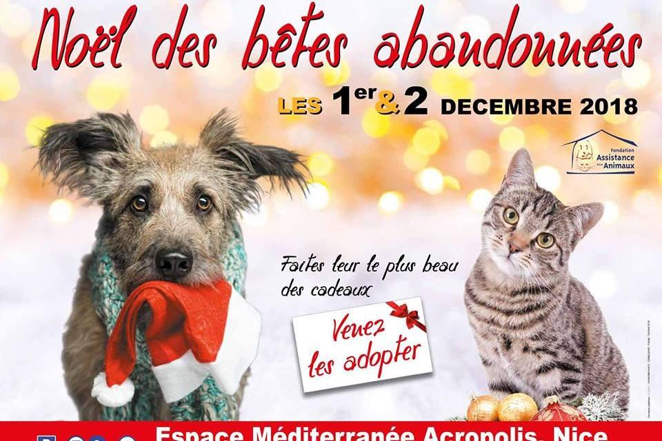 Les Noël des Bêtes Abandonnées à Nice