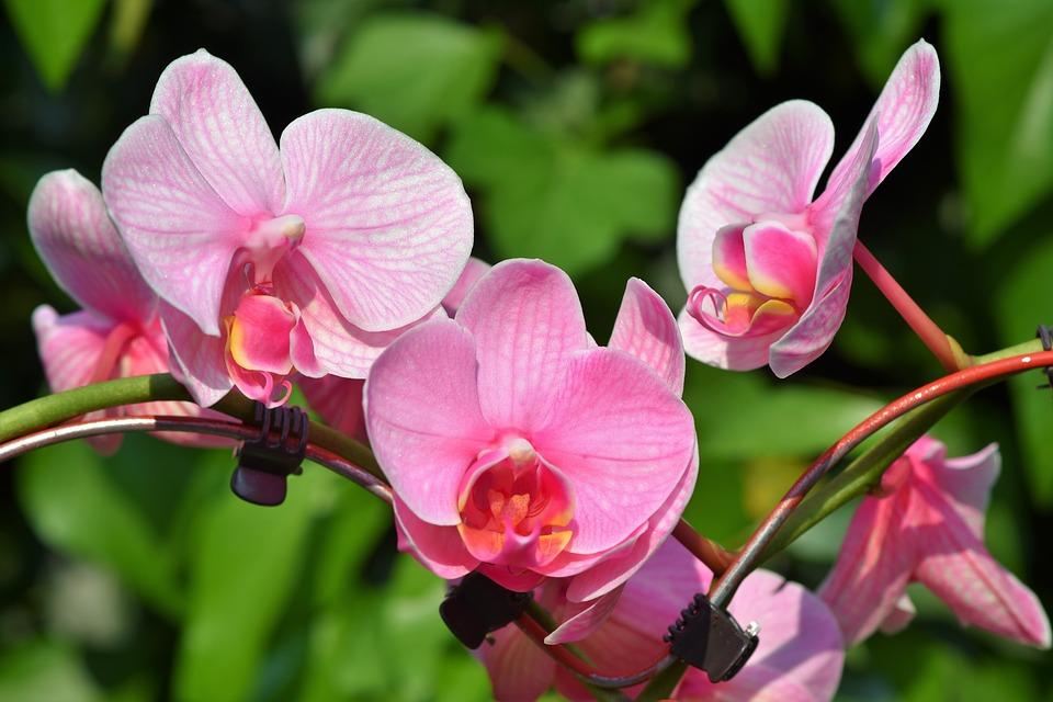 Journées Portes Ouvertes «Les Orchidées de Michel Vacherot»