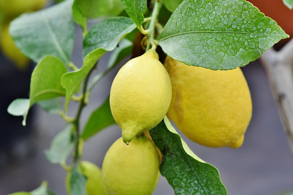 La Maison du Citron à Menton