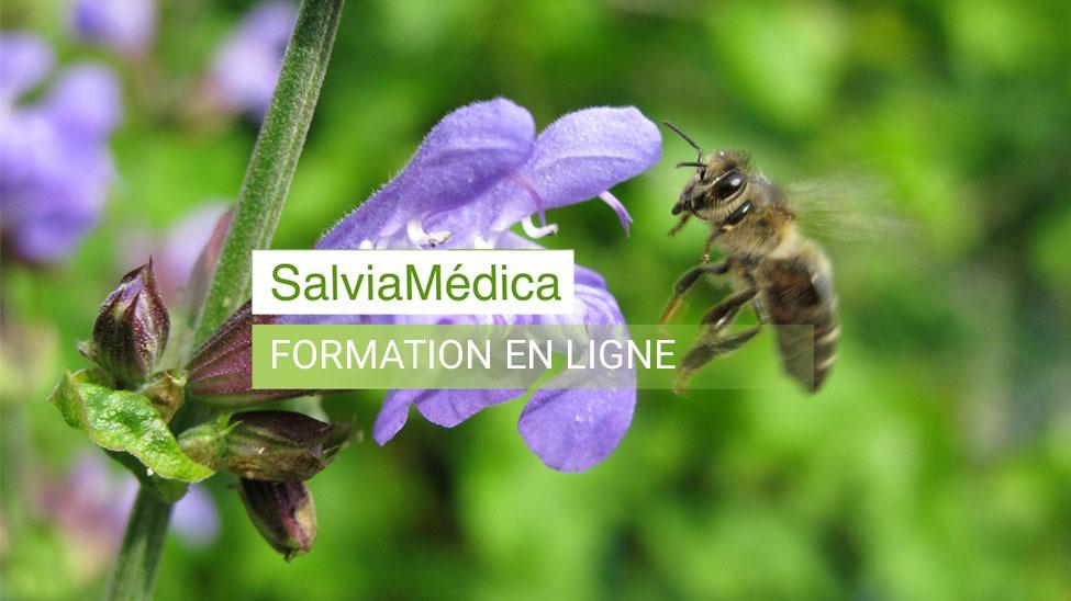 Formation en phytothérapie et aromathérapie SalviaMédica
