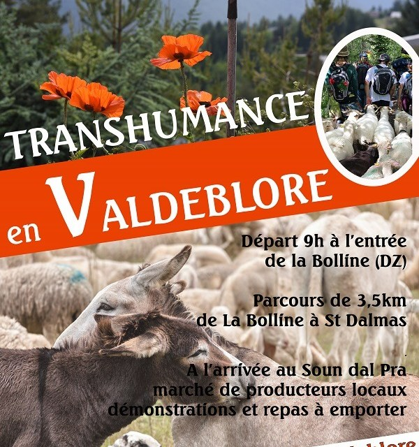 Transhumance en Valdeblore