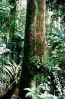 Image of a Tropical Rainforest.