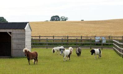 redwings horse sanctuary cotswolds