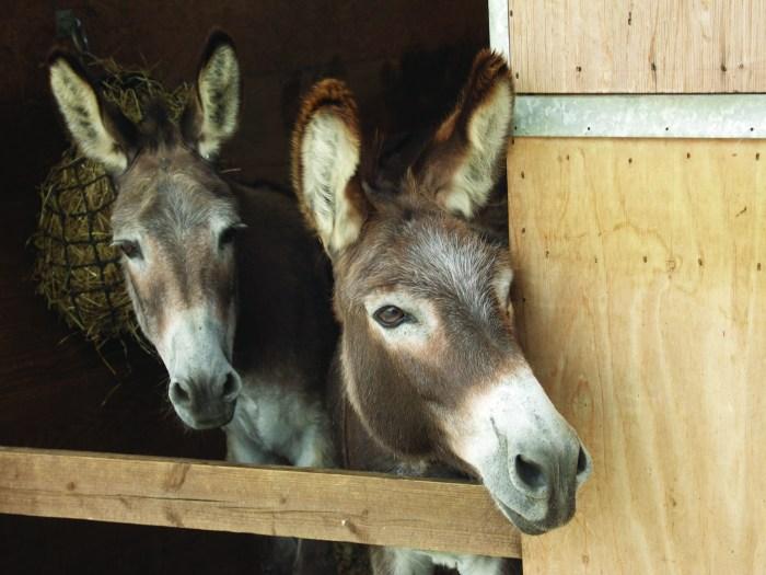 redwings horse donkey sanctuary cotswolds