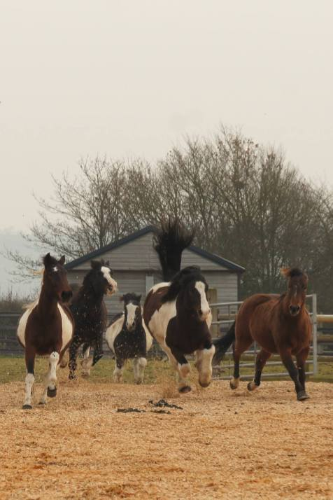 Redwings Horse Sanctuary Oxhill Visitor Centre